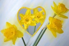 Daffodils odbijający w lustrze Obraz Stock