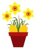 Daffodils in pot Stock Photo