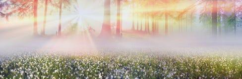 Daffodils przy wschodem słońca Zdjęcia Royalty Free