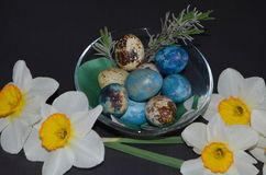 Daffodils and quail eggs Stock Photo