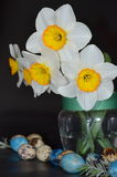 Daffodils and quail eggs Royalty Free Stock Photography