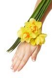 daffodils ręka Fotografia Stock