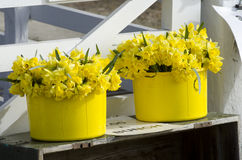 Daffodils for sale. At a road side stall Royalty Free Stock Photos