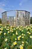 Daffodils and Screen Stock Images