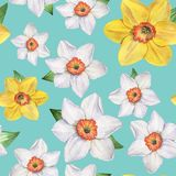 5 Daffodils - Seamless pattern. Watercolor illustration. Hand-drawing. Background. stock photography