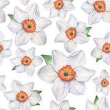 Daffodils - Seamless pattern 1. Watercolor illustration. Hand-drawing. royalty free stock photography