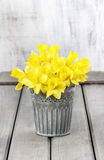 Daffodils in silver bucket Royalty Free Stock Photos