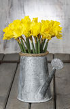 Daffodils in silver watering can Stock Photography