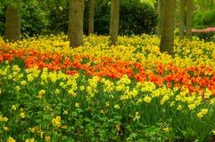 Daffodils in spring garden Royalty Free Stock Photos
