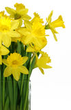Daffodils in a square glass vase Stock Image