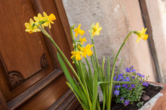 Daffodils in the street in a typical alsatian village Stock Photo