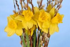 Daffodils sull'azzurro immagine stock libera da diritti