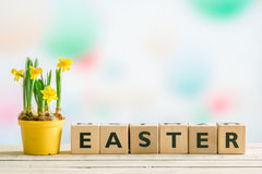 Daffodils on a table with the word easter Stock Photo