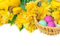 Daffodils, tulips, Easter eggs Stock Images