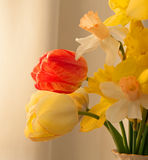 Daffodils and Tulips. A photograph of a bouquet of bright Spring yellow daffodils and red and yellow tulips Royalty Free Stock Photography