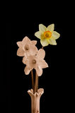 Daffodils in Vase. Three daffodils in vase, sepia with touch of color, WITH CLIPPING PATH Stock Images