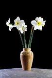 daffodils vase Στοκ Φωτογραφία