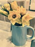 Daffodils in a vase Stock Photos