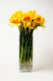 Daffodils in a vase Stock Image