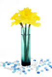Daffodils in vase on white Stock Photography