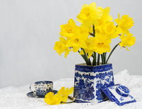 Daffodils White Background Stock Images