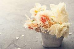Daffodils w kwiatu garnku na betonowym tle Zdjęcie Stock