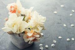 Daffodils w kwiatu garnku na zmroku betonują tło Zdjęcia Stock
