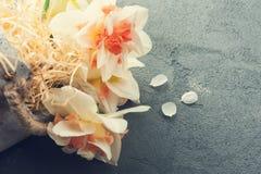 Daffodils w kwiatu garnku na zmroku betonują tło Zdjęcie Stock