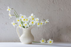 Daffodils on white background Stock Photography