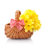 Daffodils in wicker basket. On white background Royalty Free Stock Image