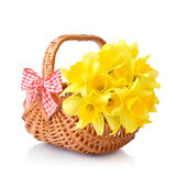Daffodils in wicker basket Royalty Free Stock Image