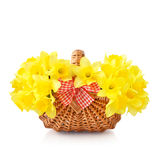 Daffodils in wicker basket Royalty Free Stock Photo