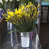 Daffodils in wooden basket Stock Images