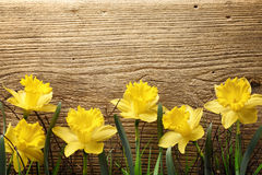 Daffodils on wooden board Stock Images