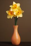Daffodils in Wooden Vase. Vertical image of three daffodils in a simple wooden vase with a brown background Royalty Free Stock Images
