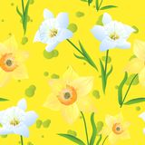 Daffodils on a yellow Background-01. Beautiful seamless pattern. Vector illustration with yellow and white daffodils on yellow background. Suitable for gift Stock Images