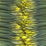 Daffodils in zinc bawl. Yellow daffodils in zinc bawl stock photos