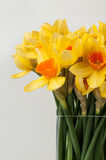 Daffoldils em um vaso Imagem de Stock Royalty Free