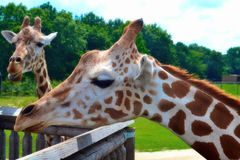 Dag bij de safari Royalty-vrije Stock Foto's