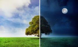 Dag en nacht scène met boom Royalty-vrije Stock Afbeeldingen