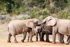 Dag för elefantstamlek - afrikanBush elefant Royaltyfri Bild