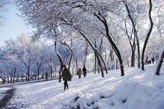 Dag för för skoghavssnowfield och mässa efter snö Royaltyfria Bilder