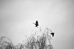 Dag för höst för svartgalanden klipsk på allhelgonaafton arkivfoto