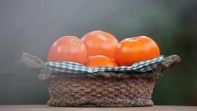 Dag för trädgård för tomatkorgsommar stock video