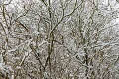 Dag för vinter` s Royaltyfria Foton