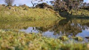 Dag för vintrar för för hedlandpöl/damm solig klar lager videofilmer