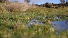 Dag för vintrar för för hedlandpöl/damm solig klar stock video