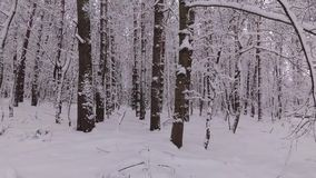 Dag in het de Winterbos, zijn de Bomen Behandeld met Sneeuw stock footage