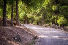 Dag i skogen, Oujda, Marocko royaltyfri bild