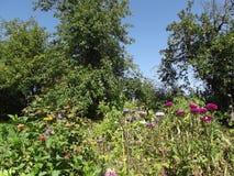 Dag i trädgården Royaltyfri Fotografi